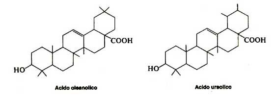 saponine steroidiche